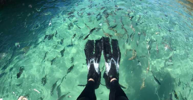 Moreton Island: Eco Marine Safari Cruise from Newport Marina