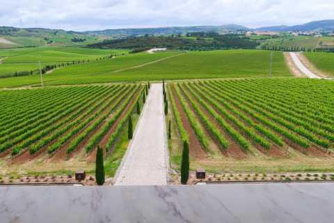 Private Wine Tour in Lisbon