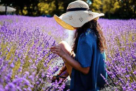 From Avignon: Lavender Day Tour