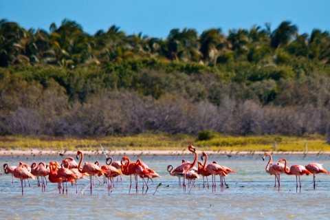 Jaragua National Park: Erkunden Sie die Laguna de Oviedo