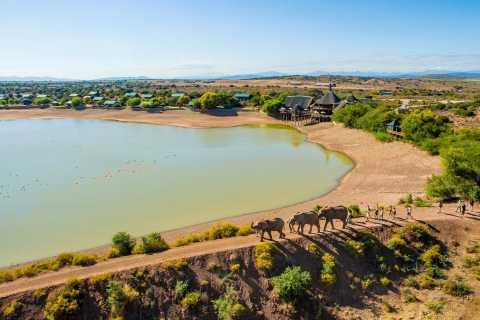 Vanuit Kaapstad: 2-daagse Zuid-Afrikaanse safaritour
