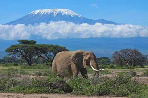Nairobi: Overnight Safari Trip to Amboseli National Park