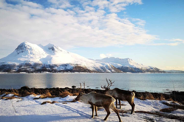 Tromsø: Fjord-Tagestour und Insel Kvaloya