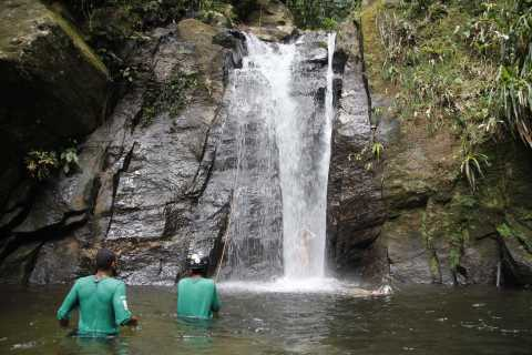 Rio: Tijuca Forest & Horto Waterfalls Circuit Tour