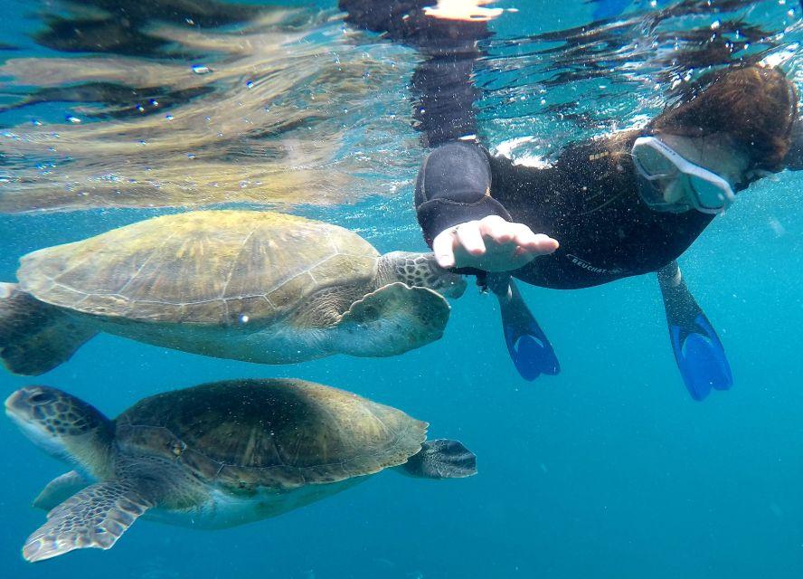 Nurkowanie z rurką z żółwiami