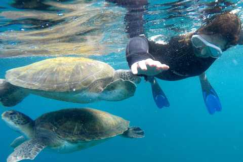 Tenerife: Snorkeling Trip in the Turtle Area