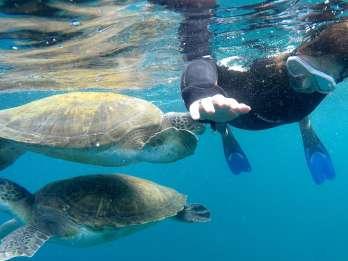 Teneriffa: Schnorchel-Tour mit Schildkröten