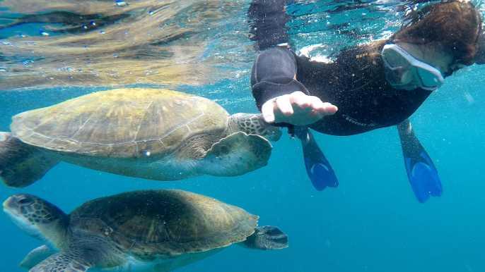 Tenerife: Snorkeling Trip in the Turtle Area