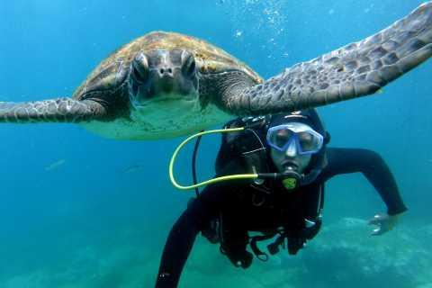 Tenerife: Descubre el buceo