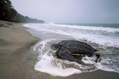 Port of Spain: Matura Beach Turtle Migration Observation