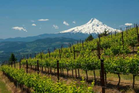 Portland: Columbia Gorge Water Rafting and Wine Day Tour