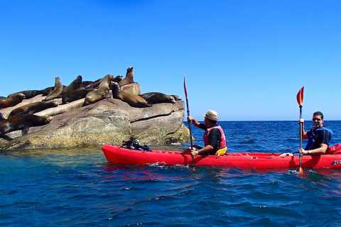 From Cabo: Cabo Pulmo Marine Park Snorkeling and Kayaking