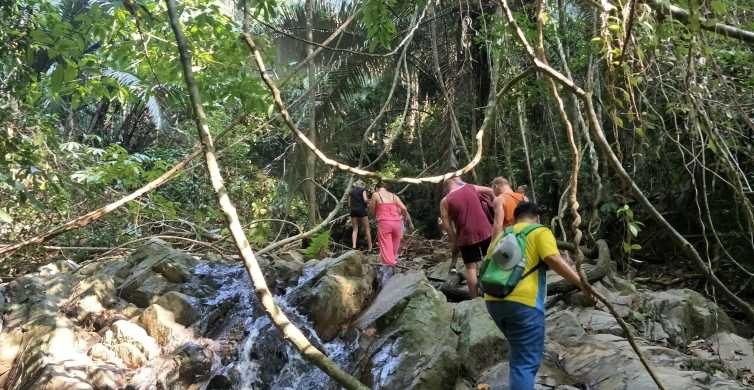 From Phuket: Half-Day Jungle Hike with Hotel Pickup