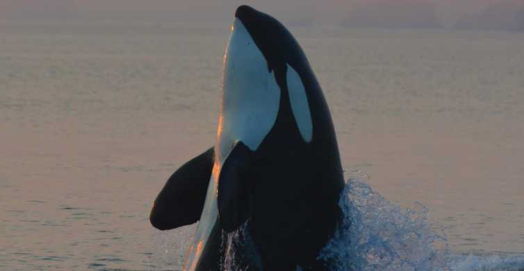 Vancouver Island: Half-Day Whale and Wildlife Adventure Tour