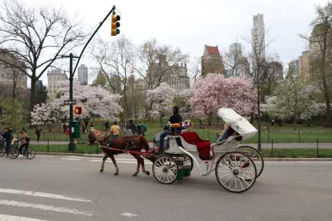 New York City: Horse Carriage Ride through Central Park