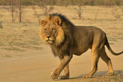 Van Durban: Hluhluwe Imfolozi Big Five Day Safari