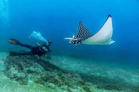 Puerto Vallarta: Scuba Dive in Las Caletas