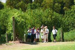 Bodega Bouza: Tour Oficial c/ Guia e Degustação de Vinhos