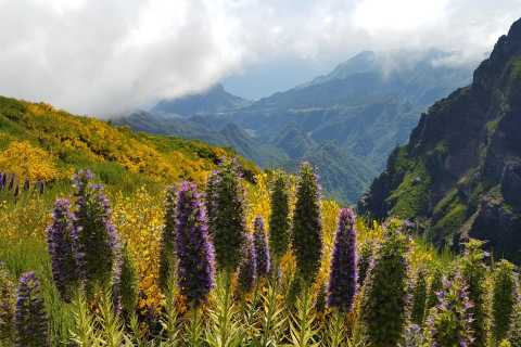 Madeira: Pico Areeiro to Pico Ruivo Hike with Transportation