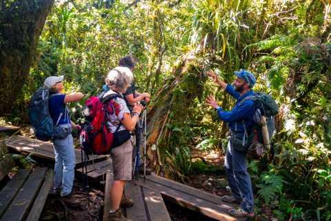 Bélouve: Randonnée privée dans la forêt de Trou de Fer