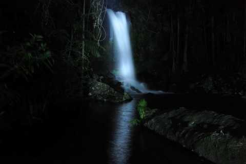 Gold Coast: Evening Rainforest and Glow Worm Experience