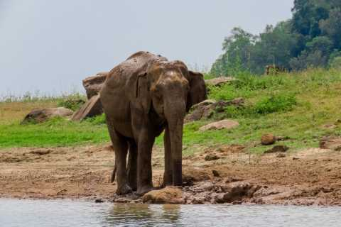 From Colombo: Private 2-Day Wildlife and World Heritage Tour