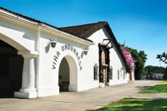 Undurraga: Excursão Oficial pela Vinícola