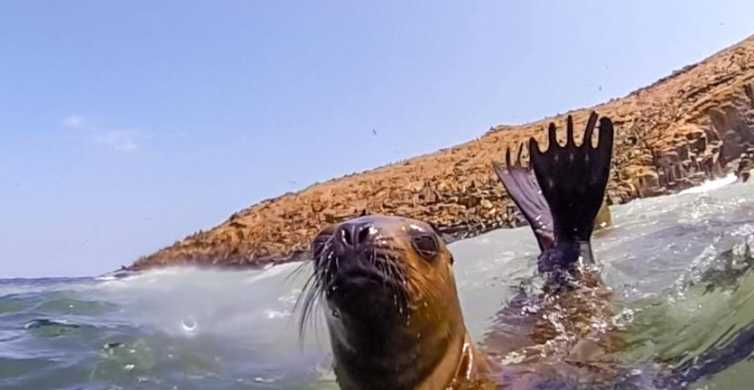 From Lima: Swim with Sea Lions on the Palomino Islands