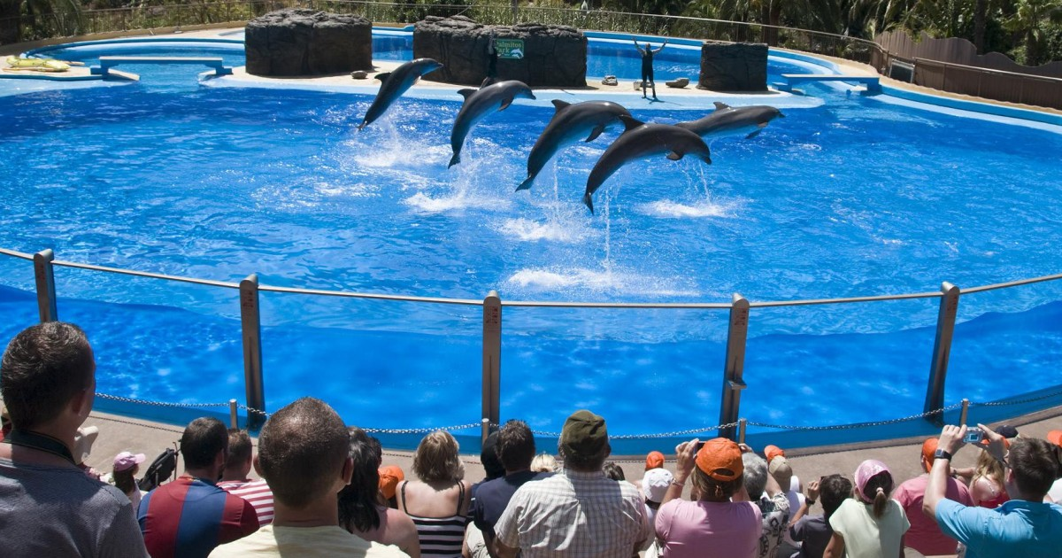 Gran Canaria: Admission Tickets for Palmitos Park - Maspalomas, Spain |  GetYourGuide