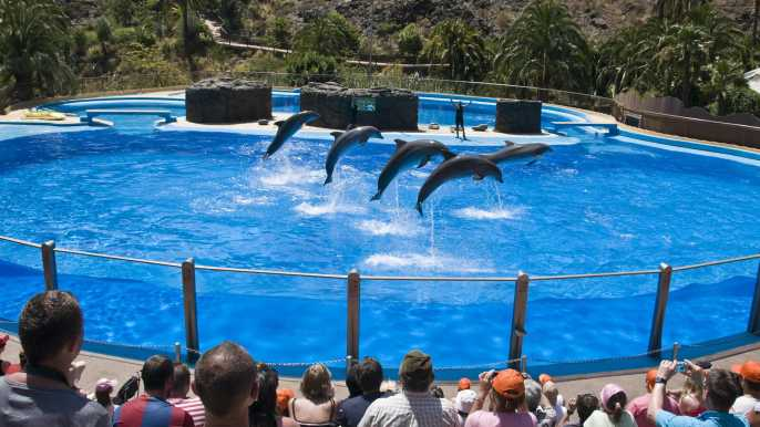 Gran Canaria: Admission Tickets for Palmitos Park