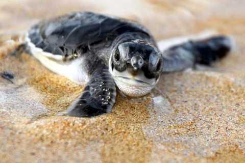 Kosgoda: Turtle Hatchery & Short South Coast Trip
