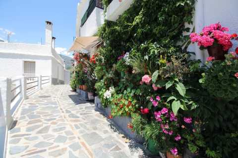 From Seville: Full-Day White Villages and Ronda Tour