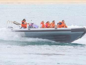 Ab Hout Bay: Seal Island mit Seehunden, geführte Bootstour