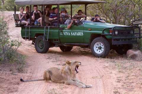 Johannesburg: 3-Day Classic Kruger National Park Safari Tour