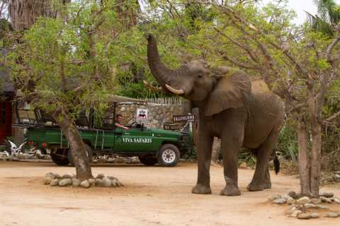 Johannesburg: 4-Day Classic Kruger National Park Safari