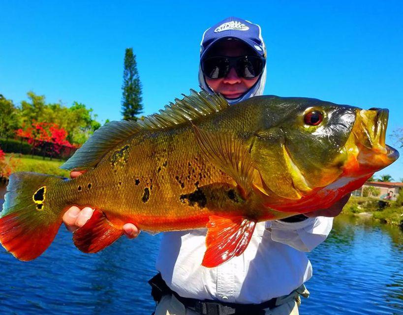 Miami: Peacock Bass Fishing Trip