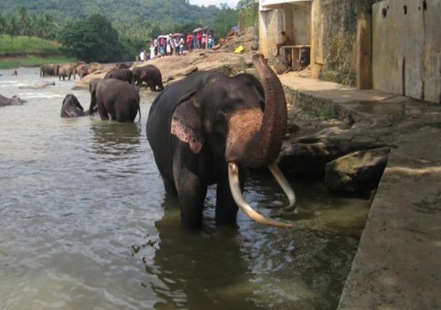 Van Colombo: Private 2-daagse Sri Lanka-hoogtepuntenreis