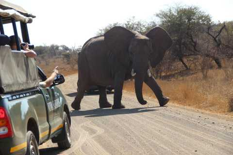 From Johannesburg: 6-Day Classic Kruger National Park Safari