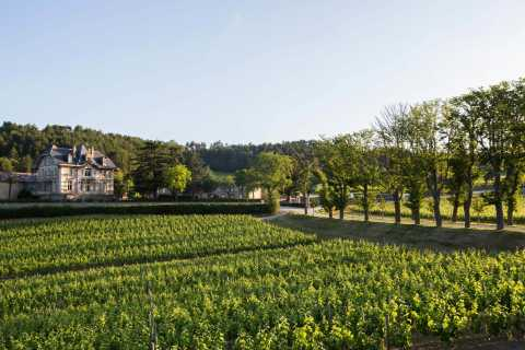 Languedoc: Tour and Tasting at Domaine de Baronarques