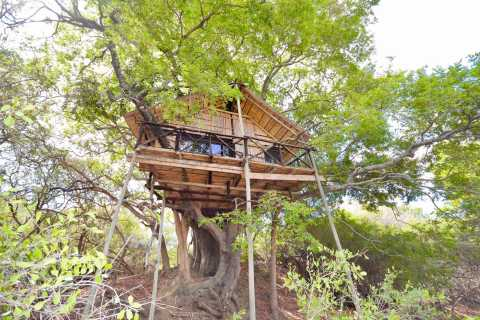 Kruger National Park: 3-Day Safari Tour and Treehouse Stay