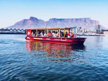 V&A Waterfront: Robben-Beobachtung bei einer Hafenrundfahrt