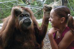 Zoológico de San Diego: Ingresso de 1 Dia Sem Fila