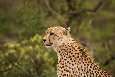 Johannesburg: Affordable 3 Day Safari Adventure in Kruger