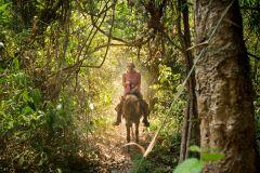 Chiang Mai: Trekking em Selva a Cavalo - Excursão de Dia Inteiro