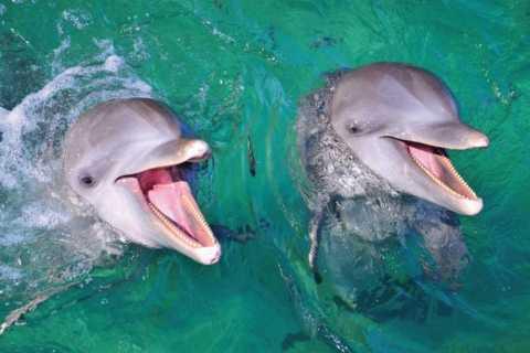 Punta Cana: nado romántico con delfines