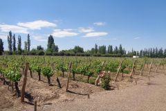Vinhos de Luján e Maipú: Tour Particular de 1 Dia c/ Almoço