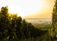Ab Florenz: Ganztägige Weintour nach Bolgheri