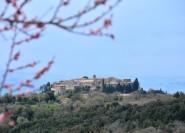 Ab Florenz: Ganztagestour nach Brunello di Montalcino
