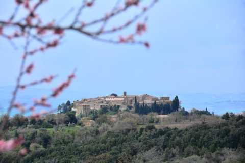 From Florence: Brunello di Montalcino Full-Day Tour