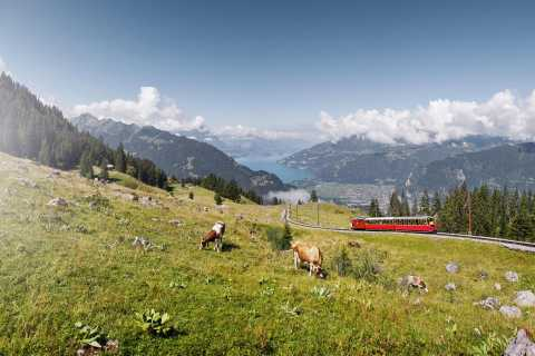 From Wilderswil: Schynige Platte Railway Round Trip and More